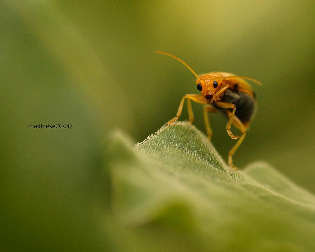 Orange bug macro