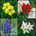 Evenor - Flowers of Israel