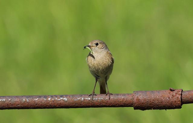 birdslakes23
