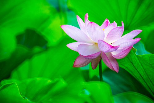 Image Result For A Flower In