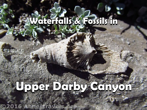 Waterfalls & Fossils in Upper Darby Canyon | by Anne's Travels