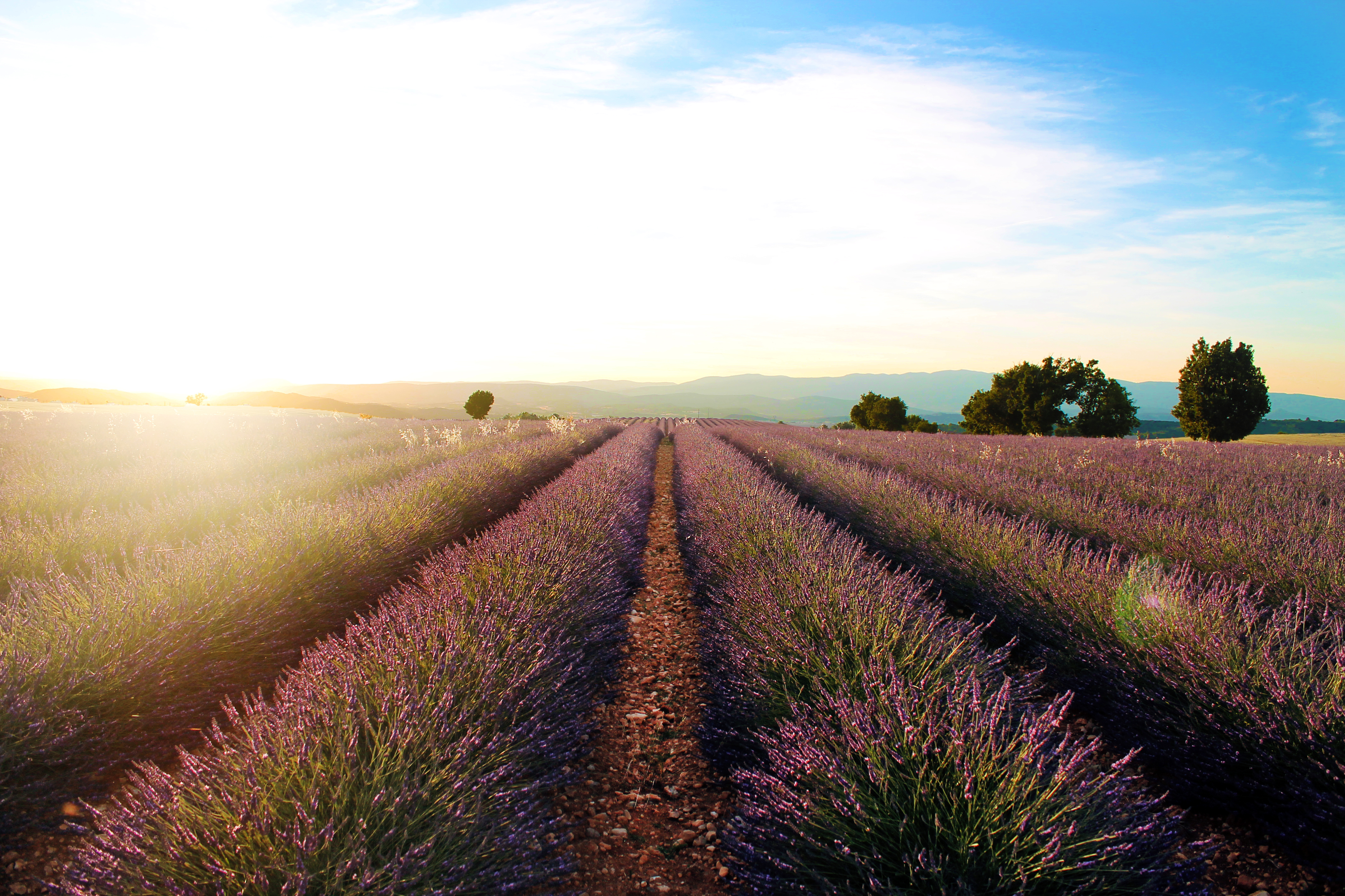 Roteiro de viagem pela Provença - Valensole