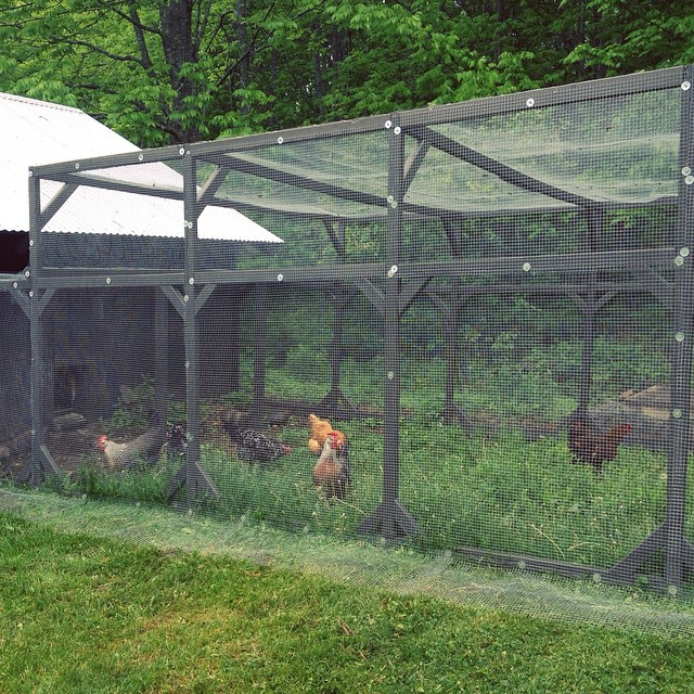 Our fourteen hens are slowly exploring their new run on this rainy day.