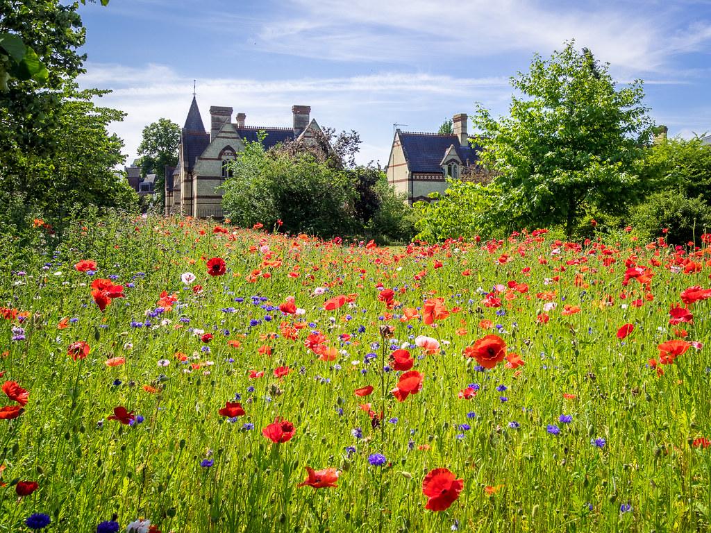 Cambridge University Botanic Garden A Nice Place To