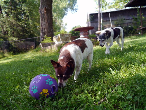 2015-06-28 - Outside with the Dogs - 0020 [flickr]