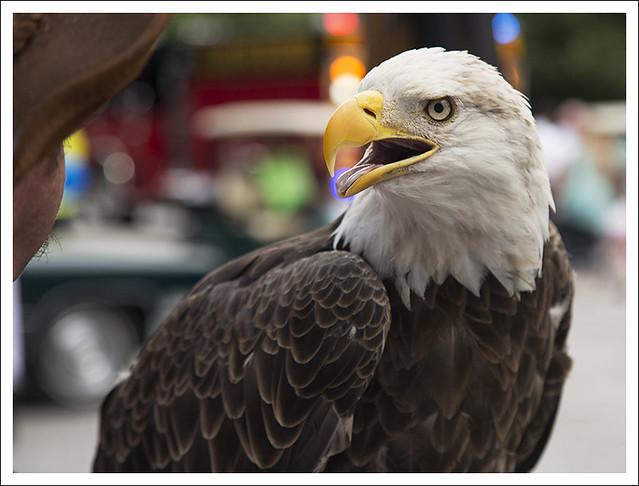 Proud Eagle 3