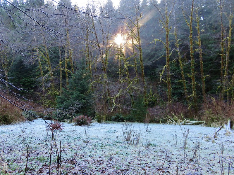 Frosty meadow in the Rock Creek Wilderness