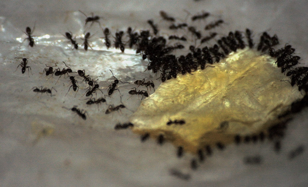 4 Ways to Rid Your Home of Ants