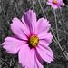 Georgia Wildflowers