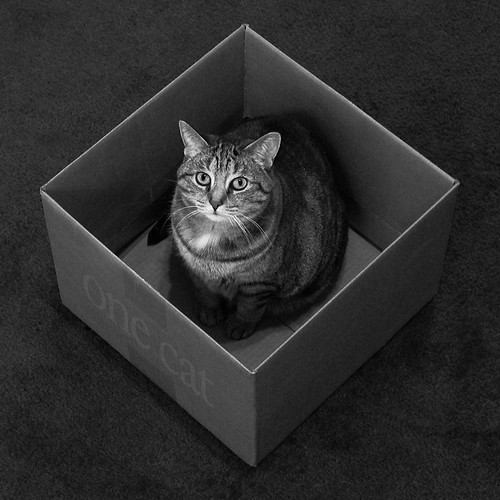 a box for every cat | by Kevin Steele