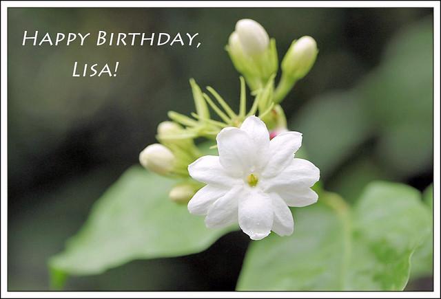 happy birthday, lisa! | happy birthday, lisa - i've chosen a ...