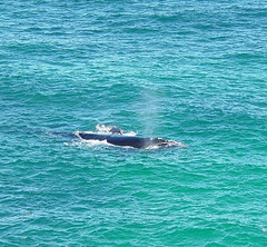 Mother and Calf whale | by yewenyi