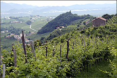 View From Cartizze Hill, Prosecco | by wine_scribbler