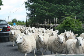 Sheep on the road | by Alexandre Dulaunoy