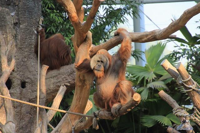 Tierpark Hagenbeck Dschungelnacht 06.05.2015   101