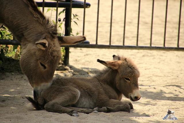 Tierpark Hagenbeck Dschungelnacht 06.05.2015   5