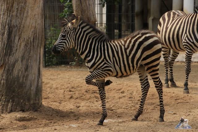 Zoo Berlin 19.06.   201552