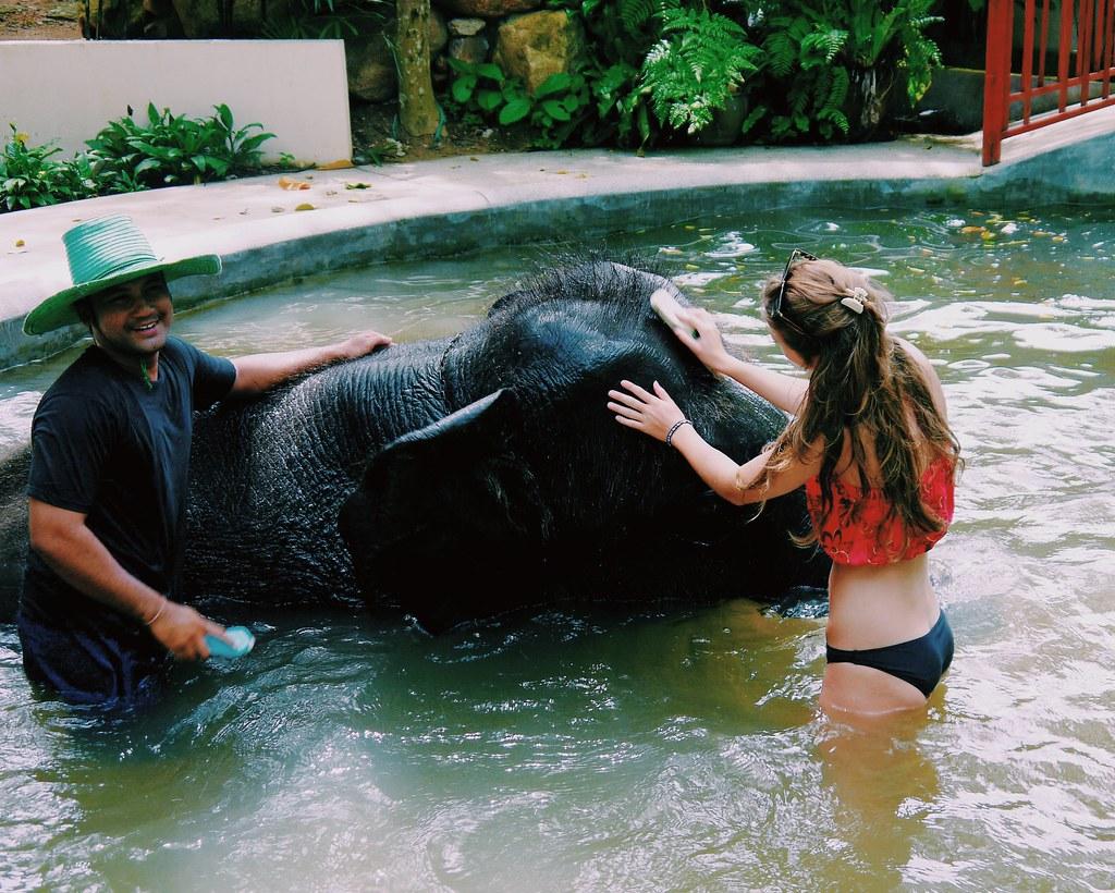 Elephant bathing Koh Samui / KWB