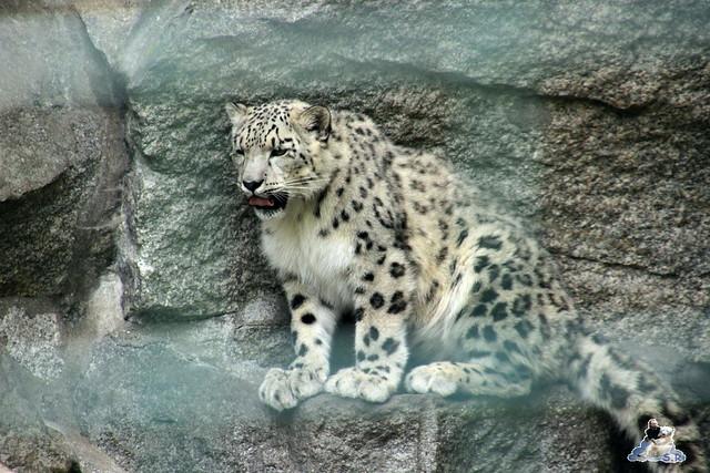 Tierpark Berlin 24.06.2014  94
