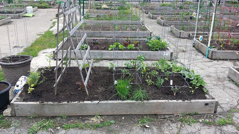 May 24, post planting