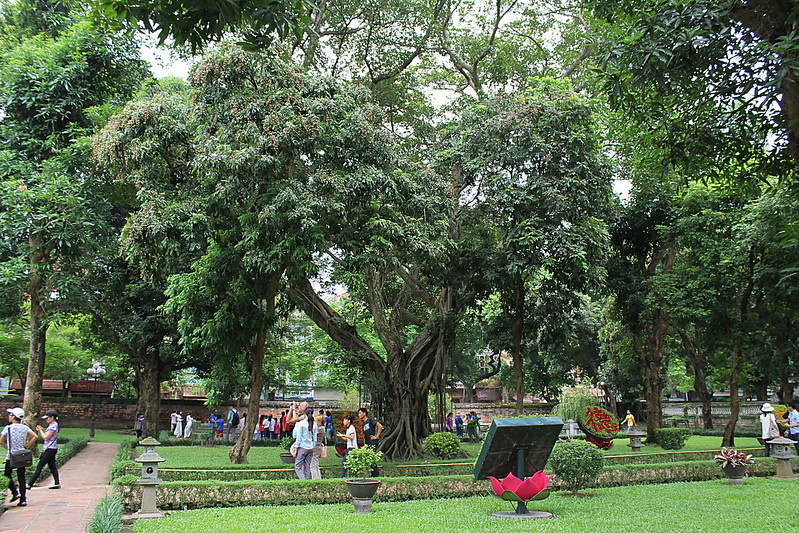 Banyan Tree, First Courtyard, Văn Miếu - Temple of Literature, Hà Nội