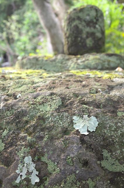 Jo-chi Temple