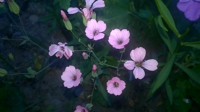 butinages du jour à l'ombre de nos plantes  19226762348_4f8c4d582e_z