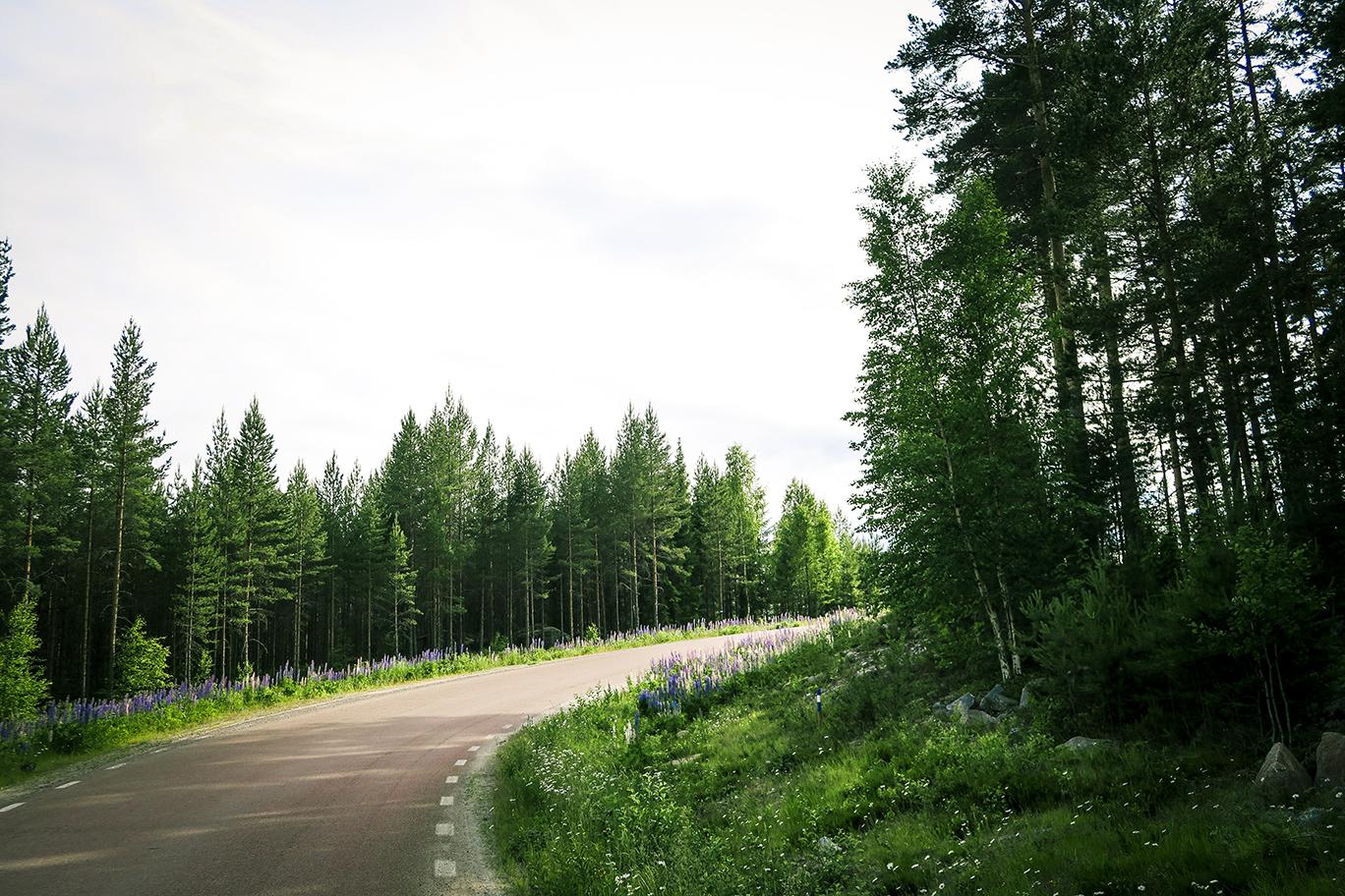 Cykling www.traningsgladje.se