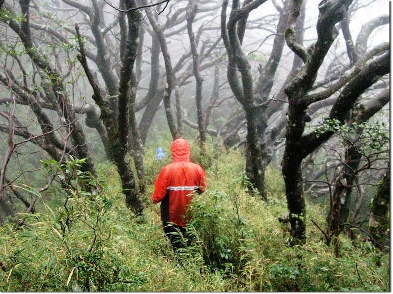 魯、南登山步道