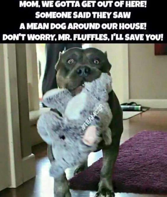 Dog Meme I Bite Things