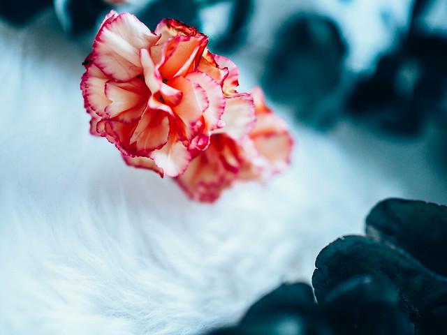 P2042330.jpgneilikkaeucalyptus,FlowersEukalyptusNeilikka-2042314.jpg,kukkakimppu, bouquet, kukat, flowers, leikkokukat, lehtivihreä, eucalyptus, popular, suosittu, muoti, fashion, oksat, branches, carnations, oranssi neilikka, orange carnations, inspiration, inspiraatio, kukka-asetelma, arrangement,