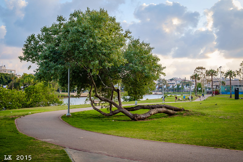 Horizontal Tree, HaYarkon Park