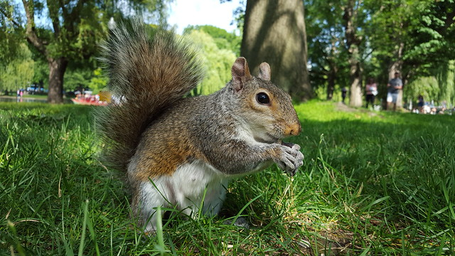 Galaxy S6 Squirrel Photo by Andy Ihnatko