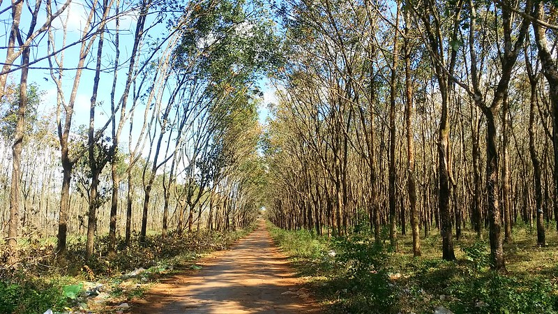 Kinh nghiệm du lịch Pleiku-rừng cao su ia drang