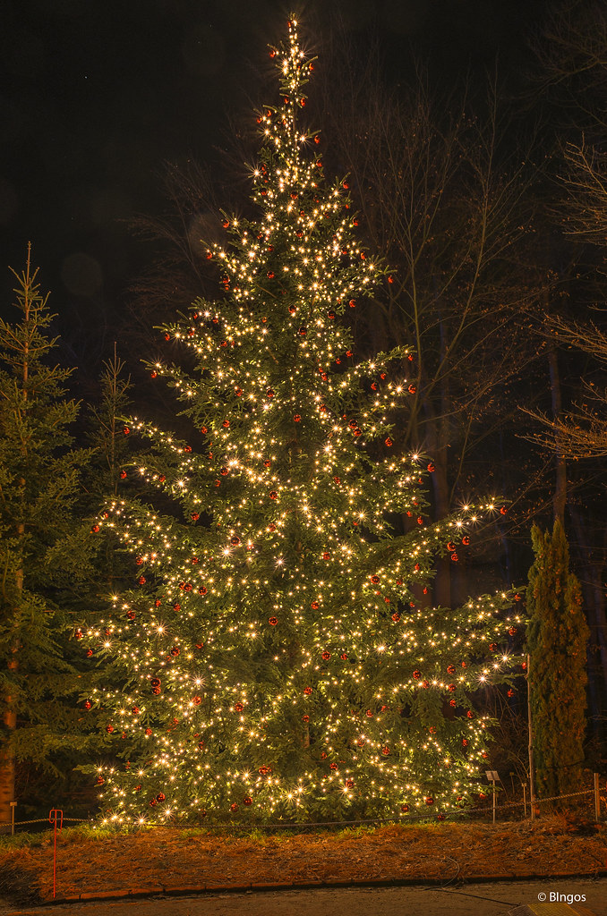 weihnachtsbaum christmas tree christmas garden berlin. Black Bedroom Furniture Sets. Home Design Ideas