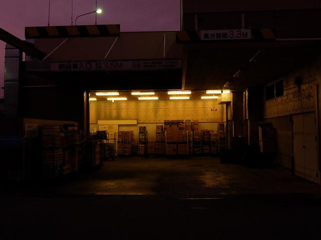 417 - wisteria2-kozo