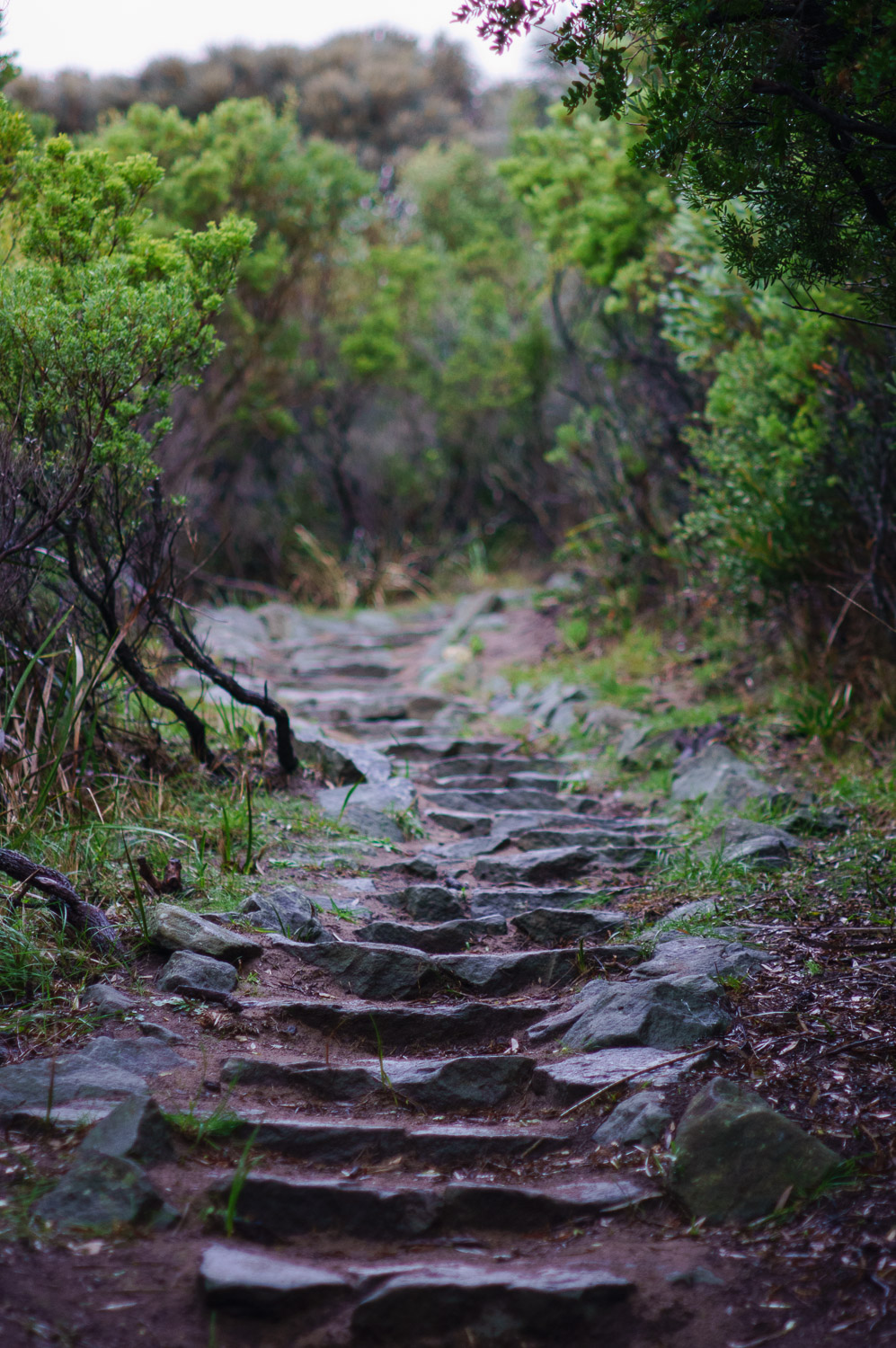 The Great Ocean Walk trail