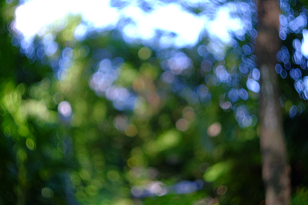Bokeh with Helios Lens  | Sunny Ngo | Flickr