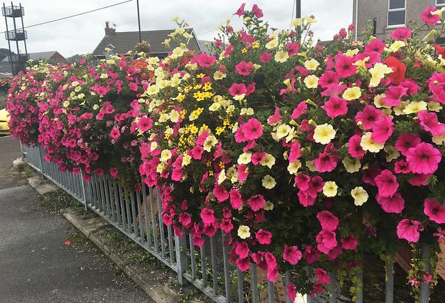 Hanging baskets in Swansea