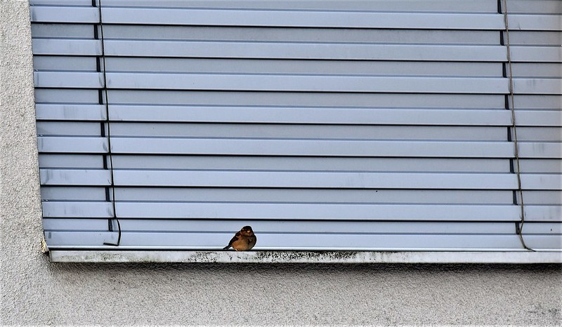 Sparrows 28.01 (3)