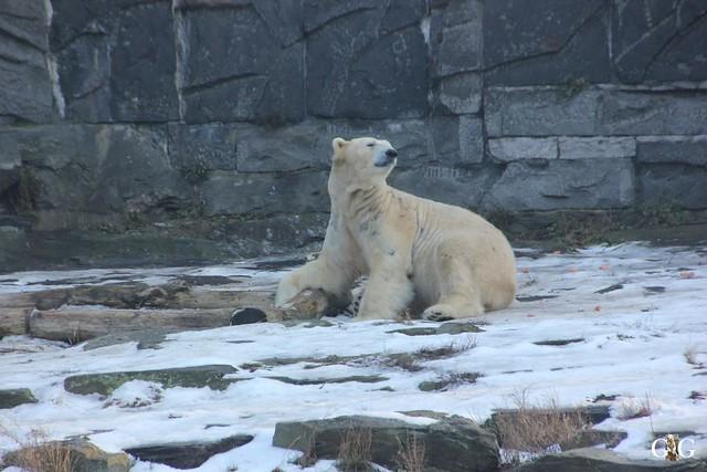Tierpark Friedrichsfelde 22.01.201772