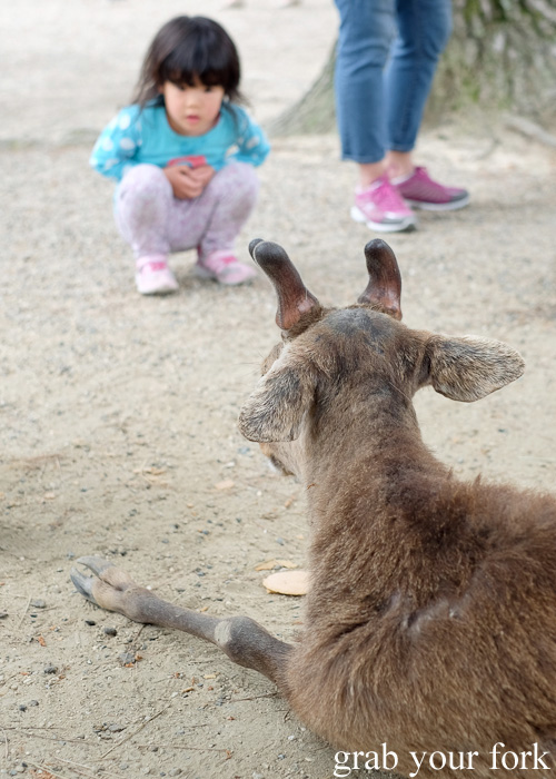 Child with a deer at Nara Park, Japan