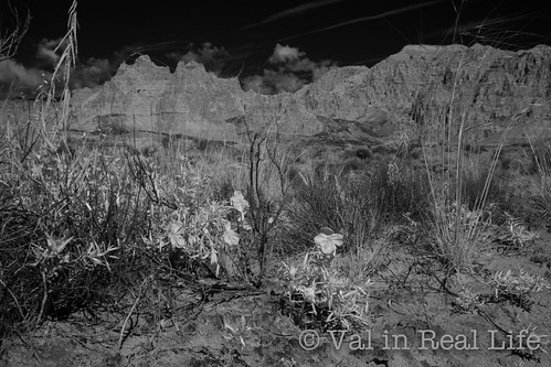 infrared wildflowers at cathedral gorge state park - val in real life