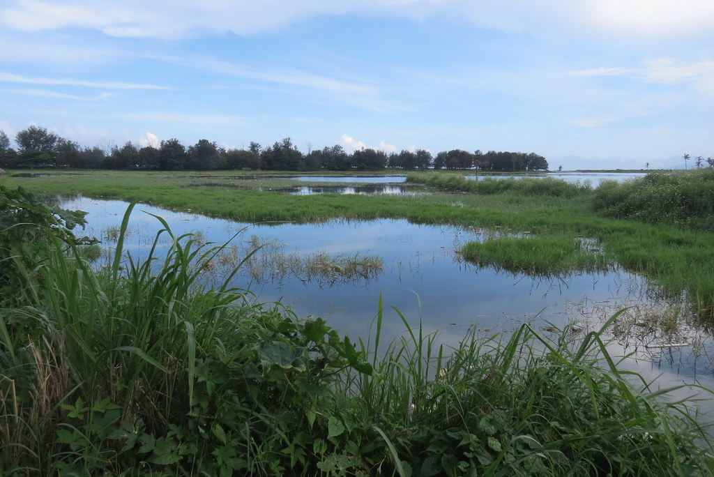 20160515尼伯特風災前濕地。荒野保護協會台東分會提供