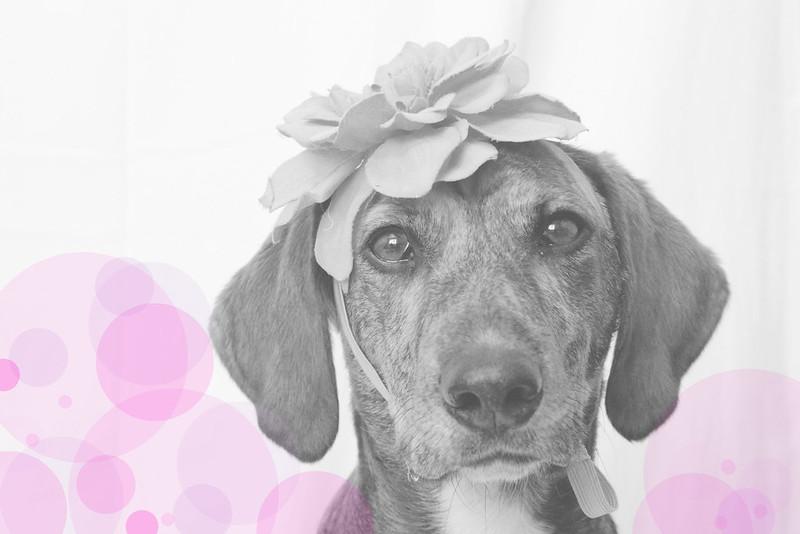 koirablogi valokuvaus