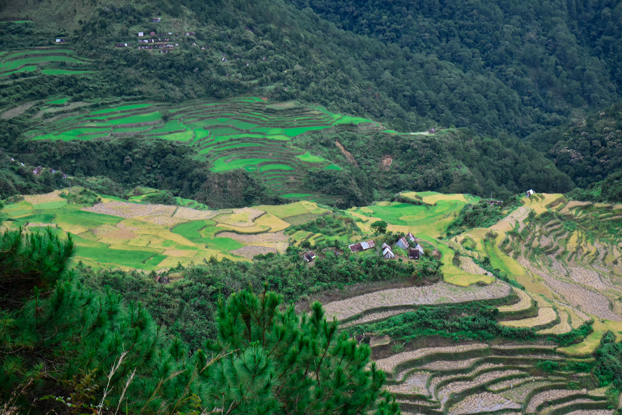 MALIGCONG RICE TERRACES COVER 5 (1 of 1)
