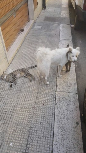 Casamassima- cane e gatto (4)