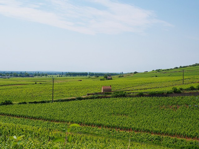 Beaune countryside/vineyards