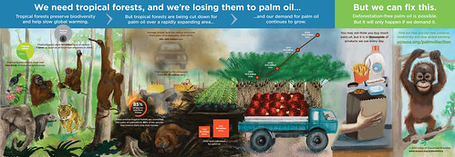 palm-oil-infographic-2-6-14-2216px | by lifeonplates