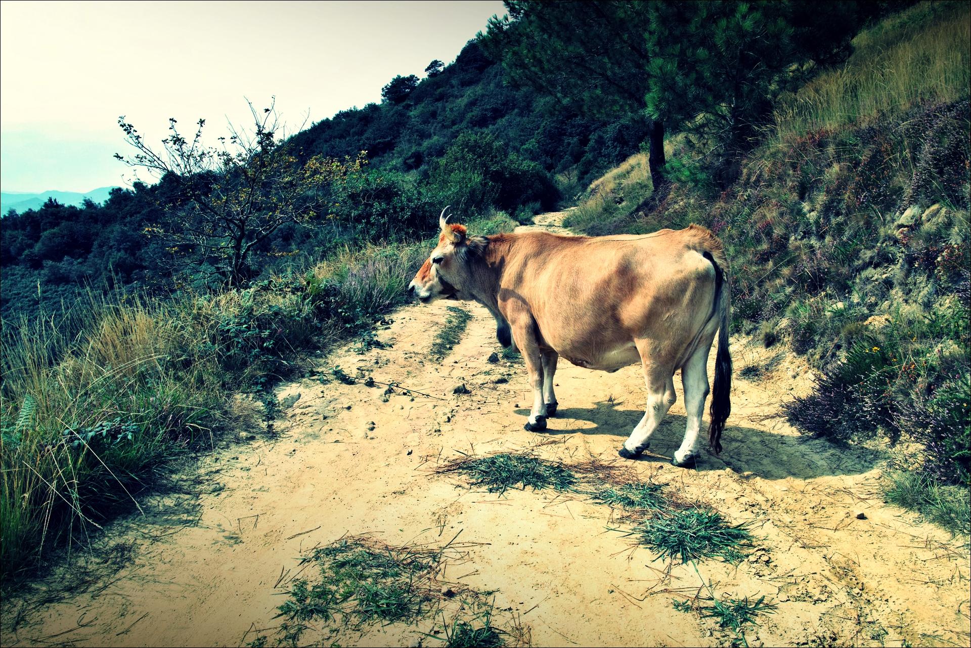 소. 파사이 도니바네 가는 길-'이룬에서 산 세바스티안 까지. 카미노 데 산티아고 북쪽길(Camino del Norte - Irun to San Sebastian)'